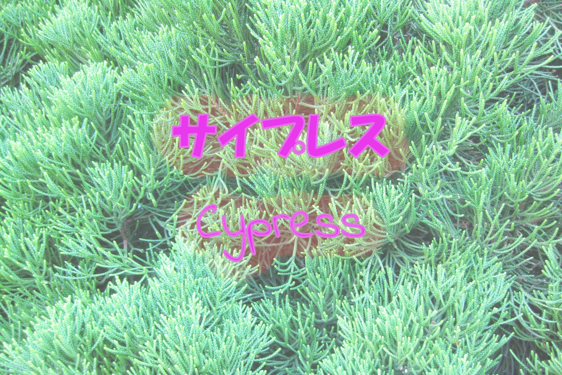 cypress_191117