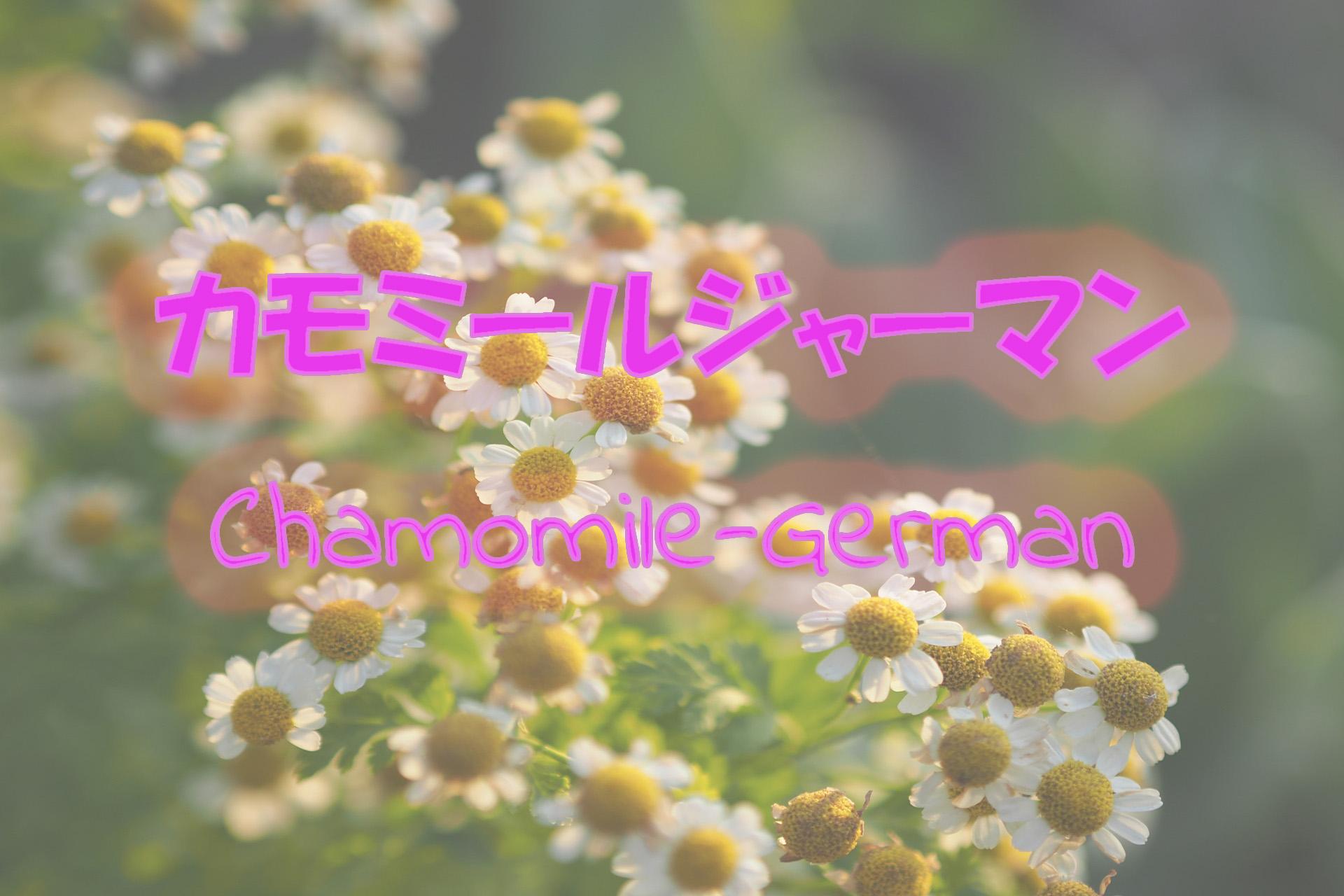 german-chamomile_191117