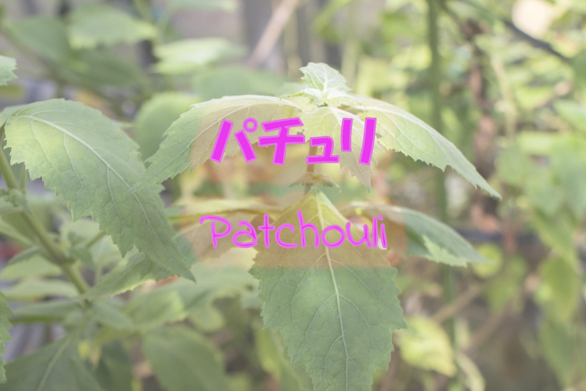 patchouli_191117
