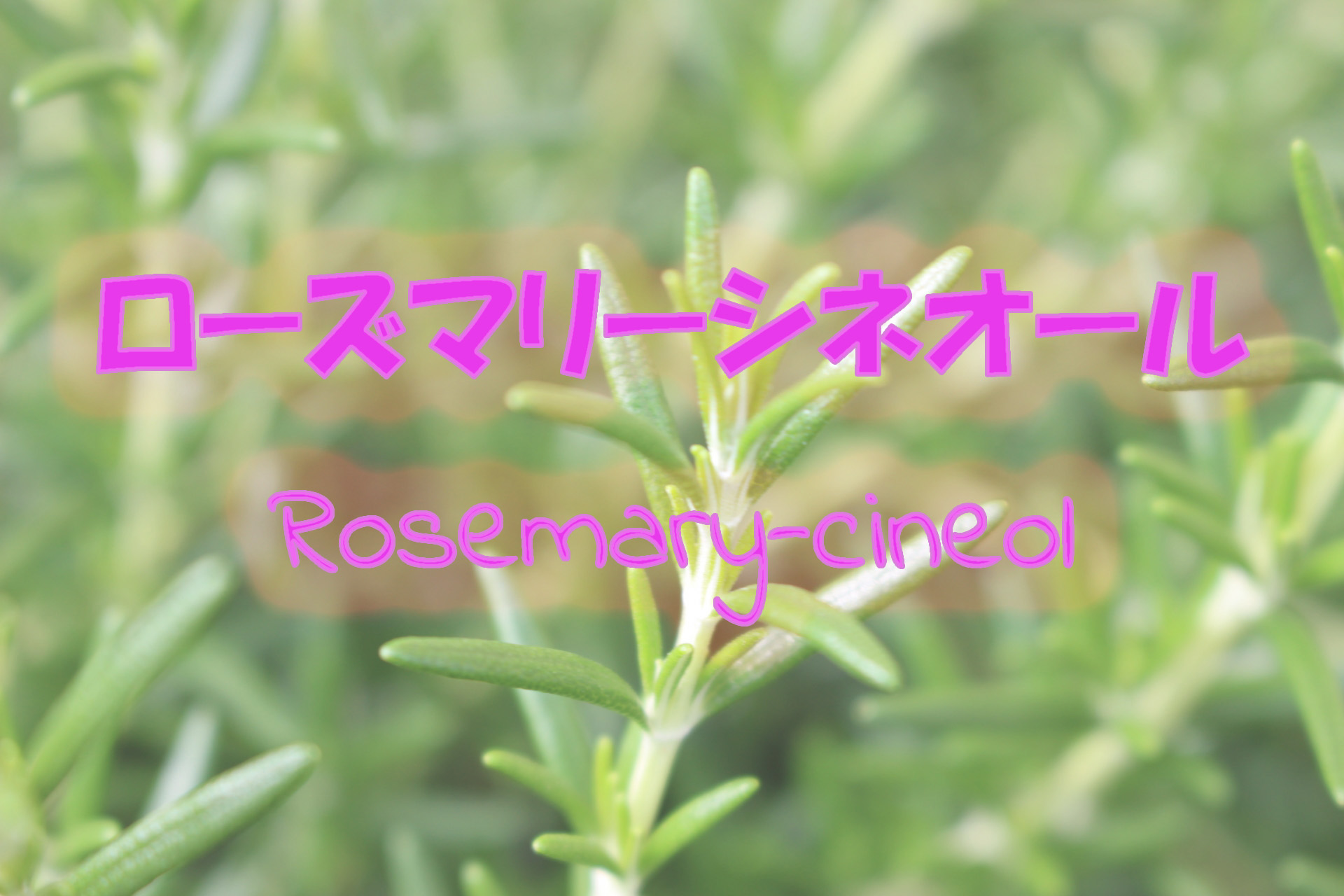 rosemary-cineol_191117