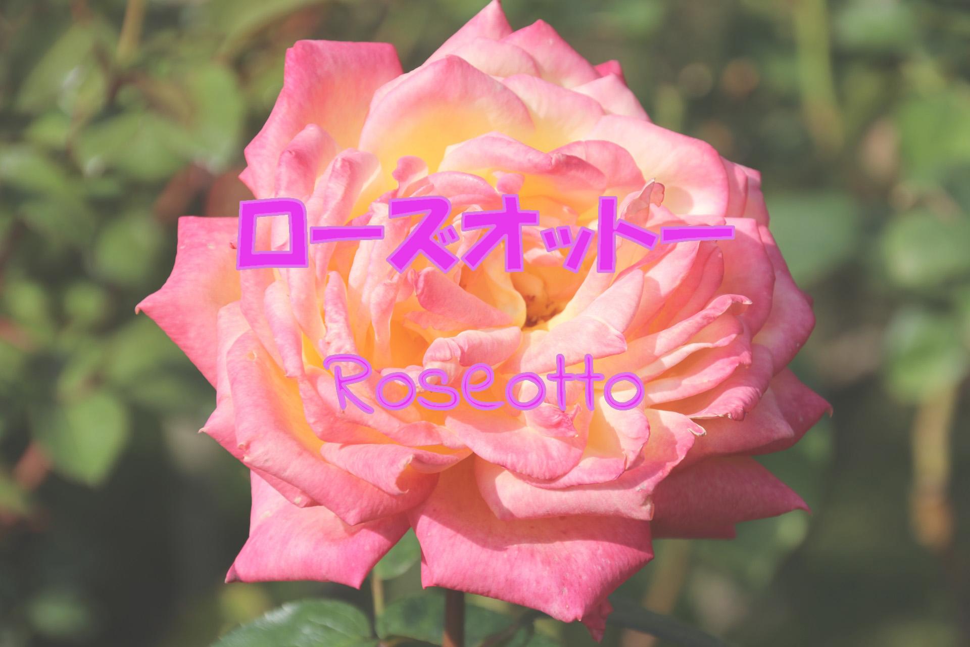 roseotto_191117